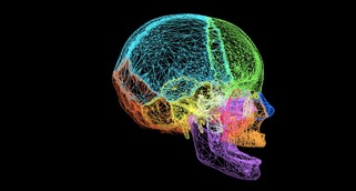A multicoloured wireframe image of a 3D scan of a human skull from the RCPSG Collection